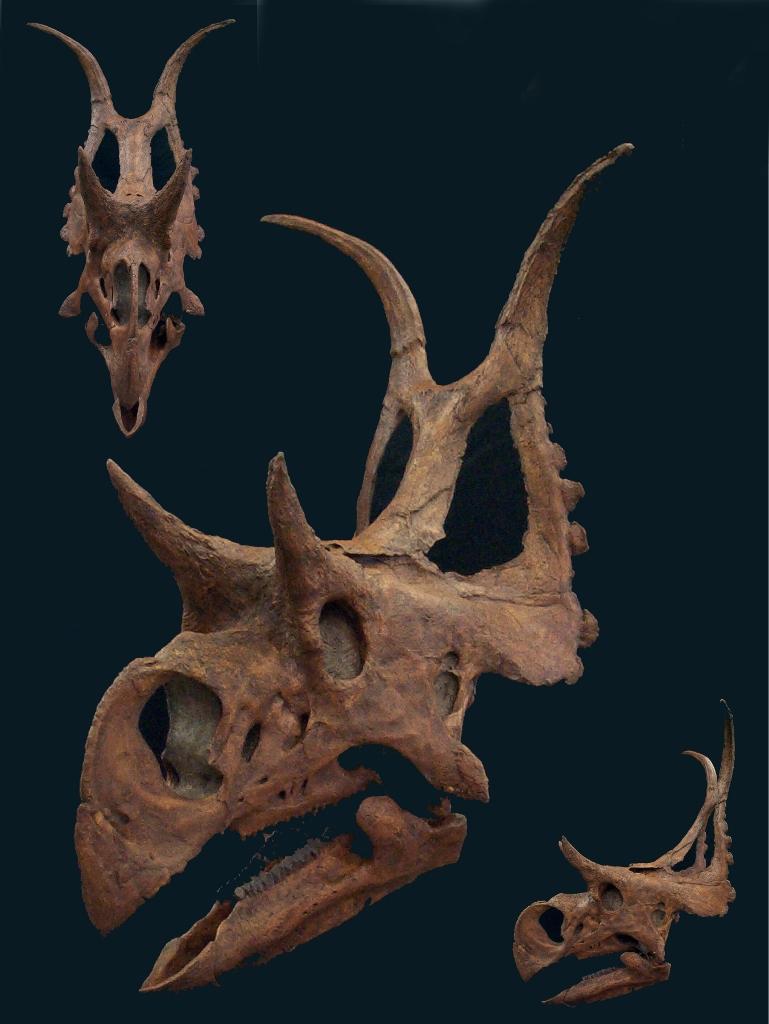 diabloceratops 3 up website (769x1024)