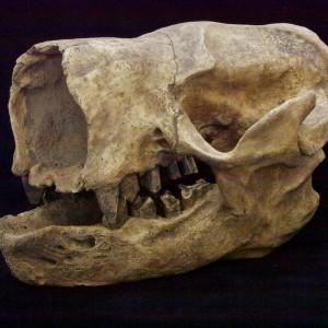 gloss skull 34vwbest web use (1024x779)