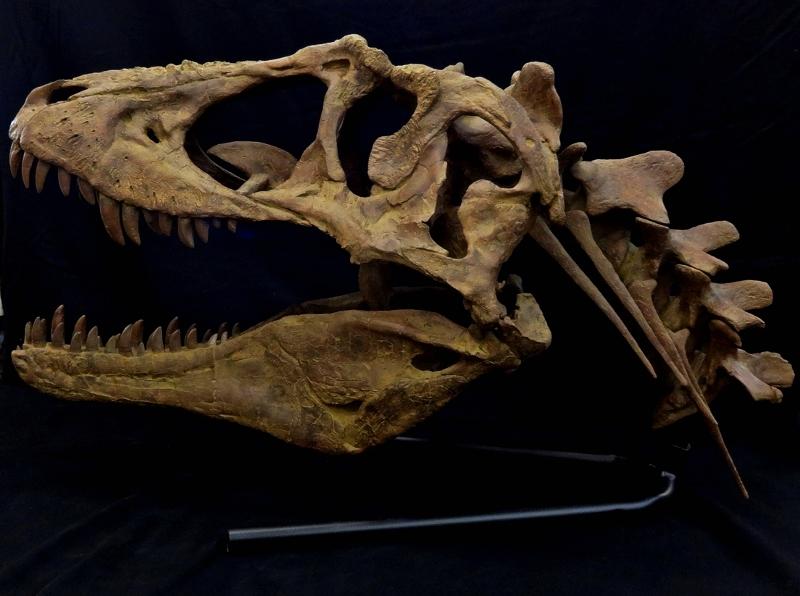 lythro neck web (800x596)