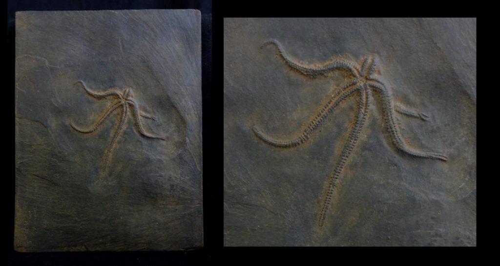 starfishplaquewebedituse