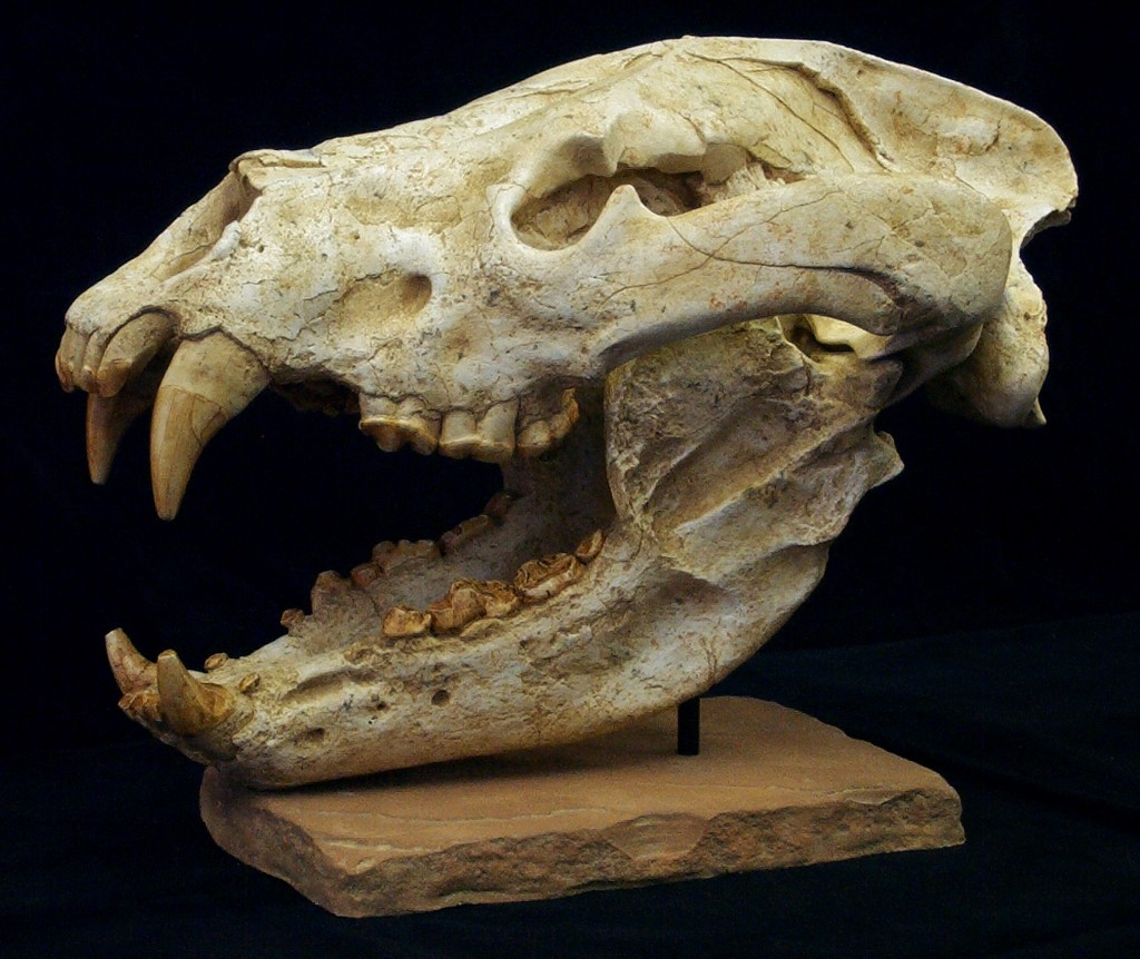 Mammal Skulls & Miscellaneous - Gaston Design, Inc.