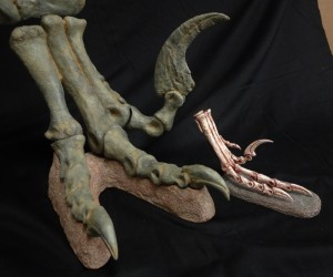 Right: Utahraptor foot and leg mount. Left: Velociraptor foot. Comparison